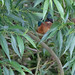 Kingfisher Secreted