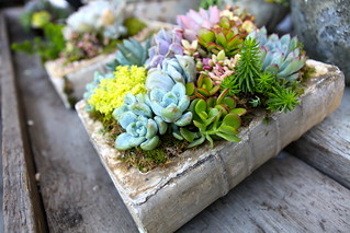 Ceramic Book Planters | by rollinggreensla