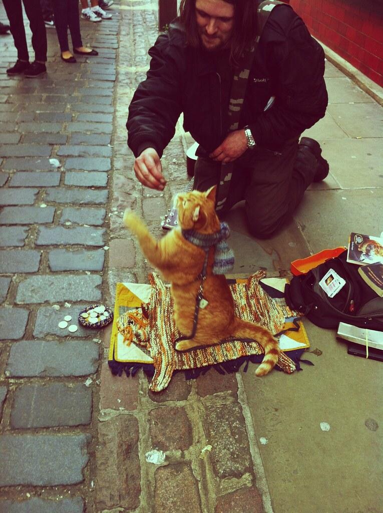 Street Cat Named Bob Film Release Date Paigton Cinama