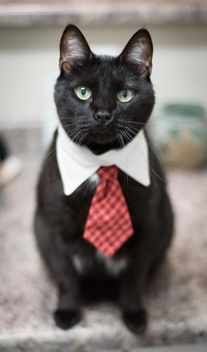 Der Kitten office assistant