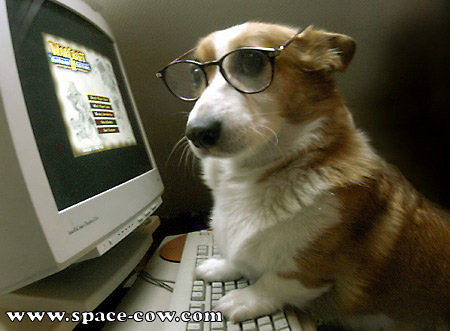 Corgi Dog For Sale Uk