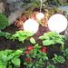 Garden Light Orbs