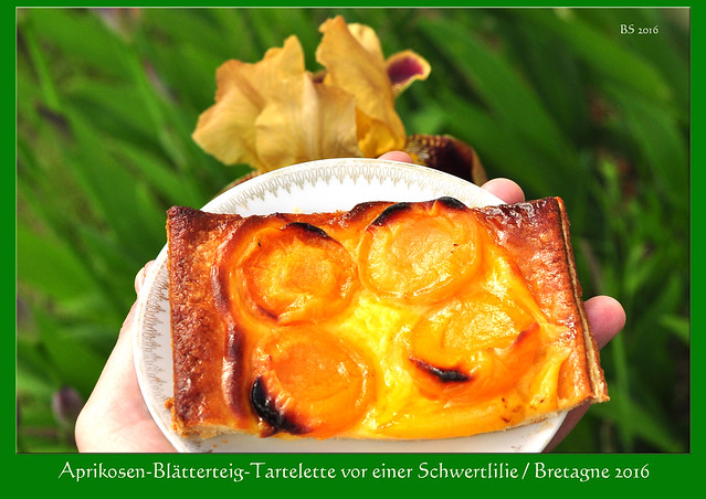 Iris Schwertlilie Garten Ferienhaus Bretagne Aprikosen-Blätterteig-Tartelette Foto Brigitte Stolle 2016
