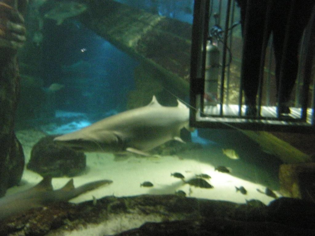 Shark Dive Lxix Photos From Long Island Aquarium