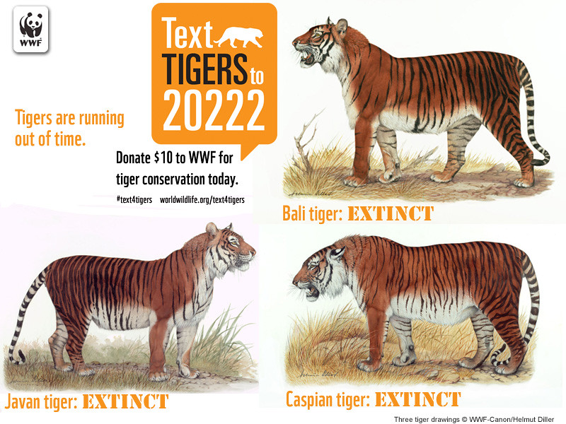 how to use tiger text