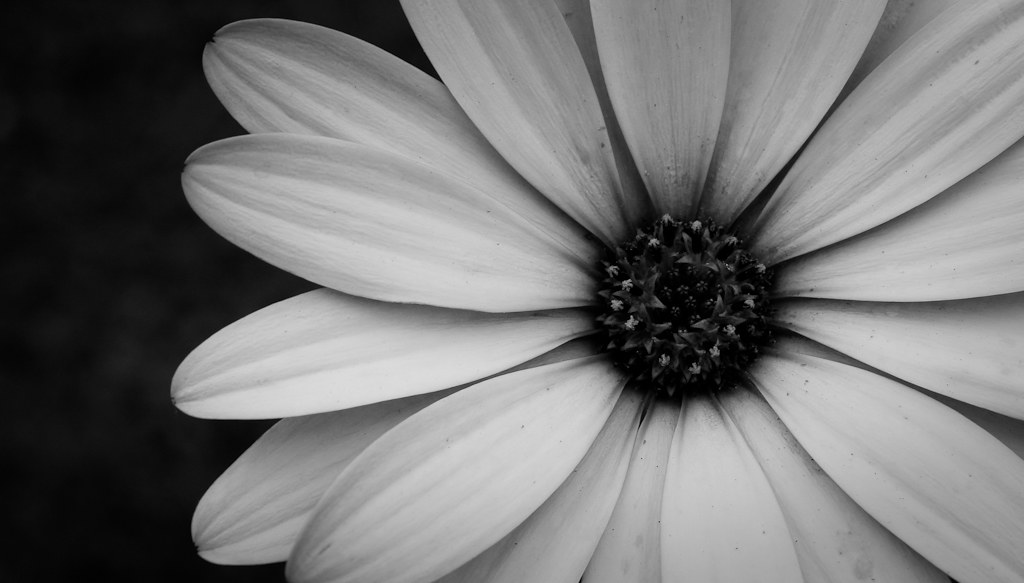 Black And White Macro Flower Photography Flower Macro Black And White