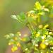 29/52 Munching on parsley