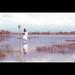 Reflexion | Mejika Setsunai