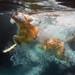 Underwater 27/52