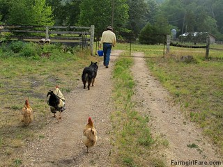Farm version of the pied piper | by Farmgirl Susan