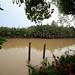 Bang Pakong River 3