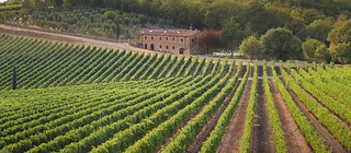 Sunlight and air enriches the Chianti grapes grown on textured terriors | by B℮n