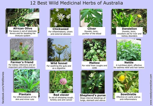 Best Plant Food For Laurels