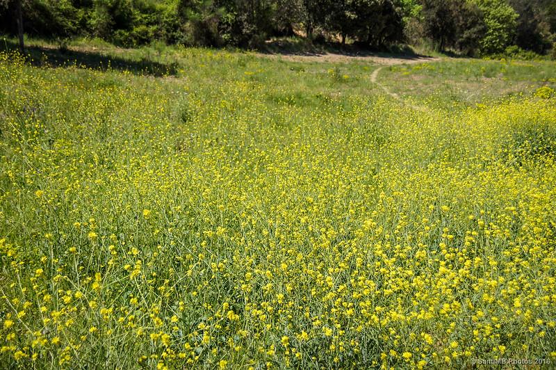 El prado amarillo