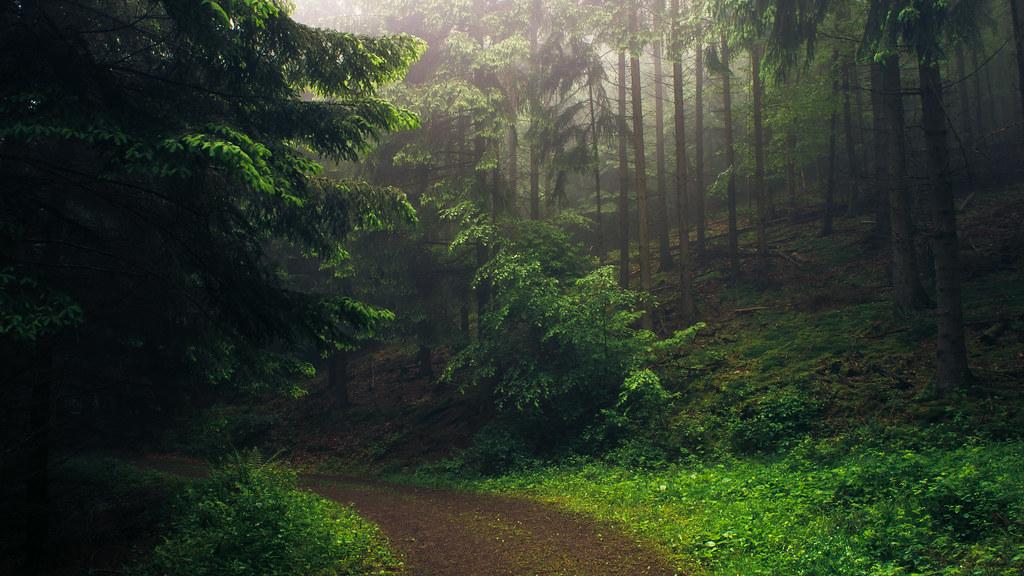 Eifel Paths