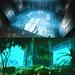 Atrium and Airlock_net