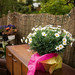 Daisies with pink tissue wrap on sideboard in the garden