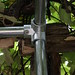 Backyard Grape Vine Trellis - Pipe & Wire