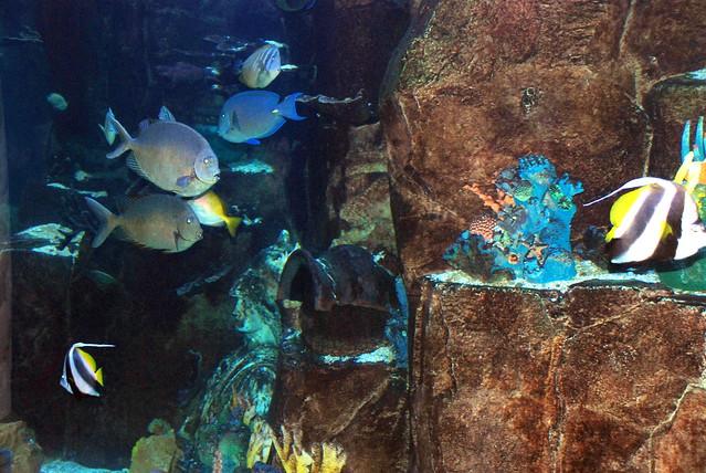 Fish in aquarium las vegas usa flickr photo sharing for Fish tank las vegas