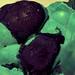 Botryoidal Malachite with Azurite