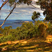 Mt Nelson 1