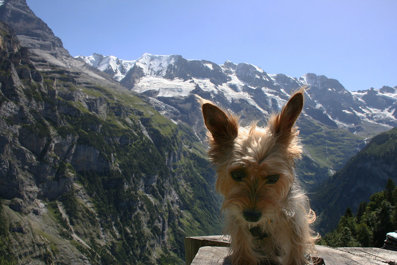Luna in the Alps