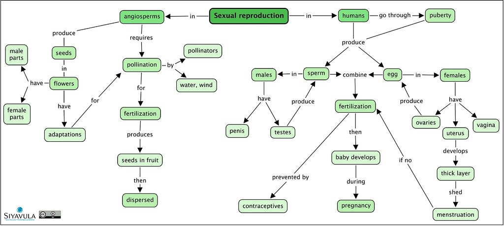 concept map on photosynthesis