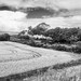 Summer Steam in Ireland (Monochrome)