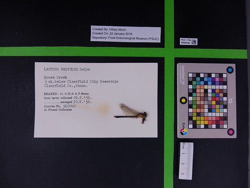 Image of specimen with collecting event data that needs to be transcribed.