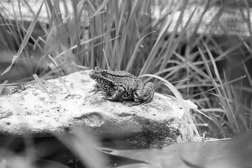 Appalachian streamside sighting BW