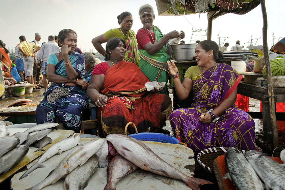 Jolly chat royapuram fish market clicked at royapuram for White fish market