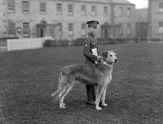 Irish Guards' Mascot - Leitrim Boy | by National Library of Ireland on The Commons
