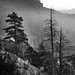 trees at bryce canyon area bw