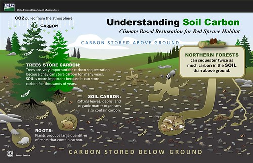Understanding soil carbon graphic