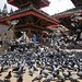 Feeding the pigeons, Durbar Square, Kathmandu