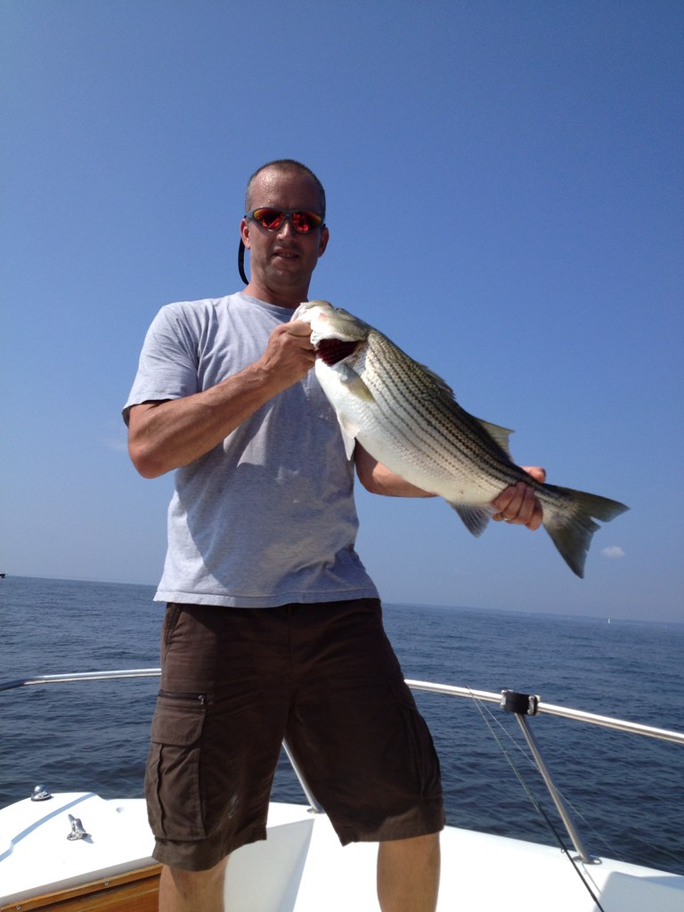 Striped bass courtesy of jim small maryland fisheries for Md dnr fishing report