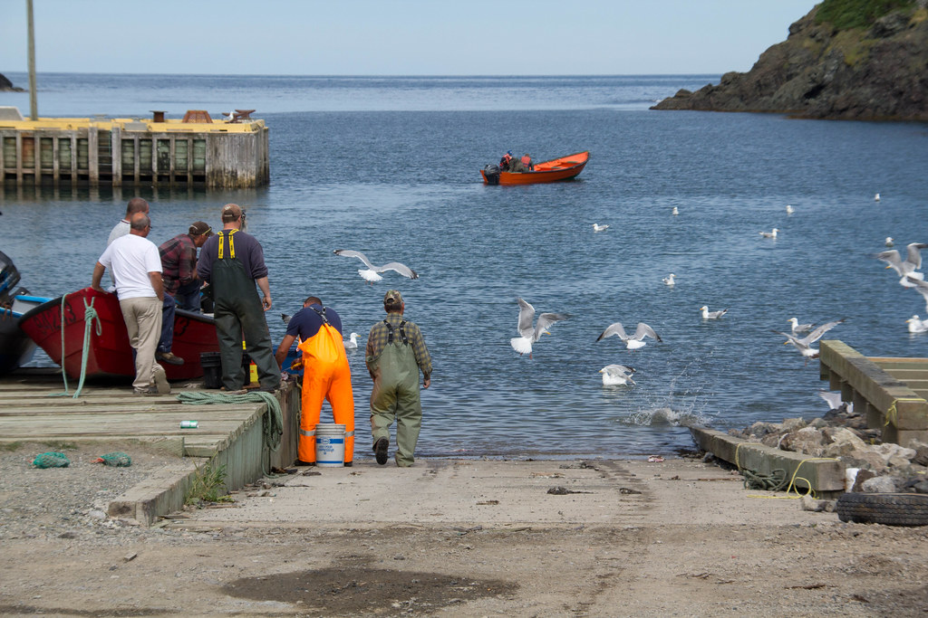 Newfoundland Food Fishery
