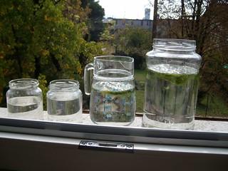 foto 11 nei vasi senza le alghe non c'è neppure una bolla, mentre le alghe sono sostenute a galla da moltissime bolle