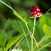 194/365 - Wild Blackberry