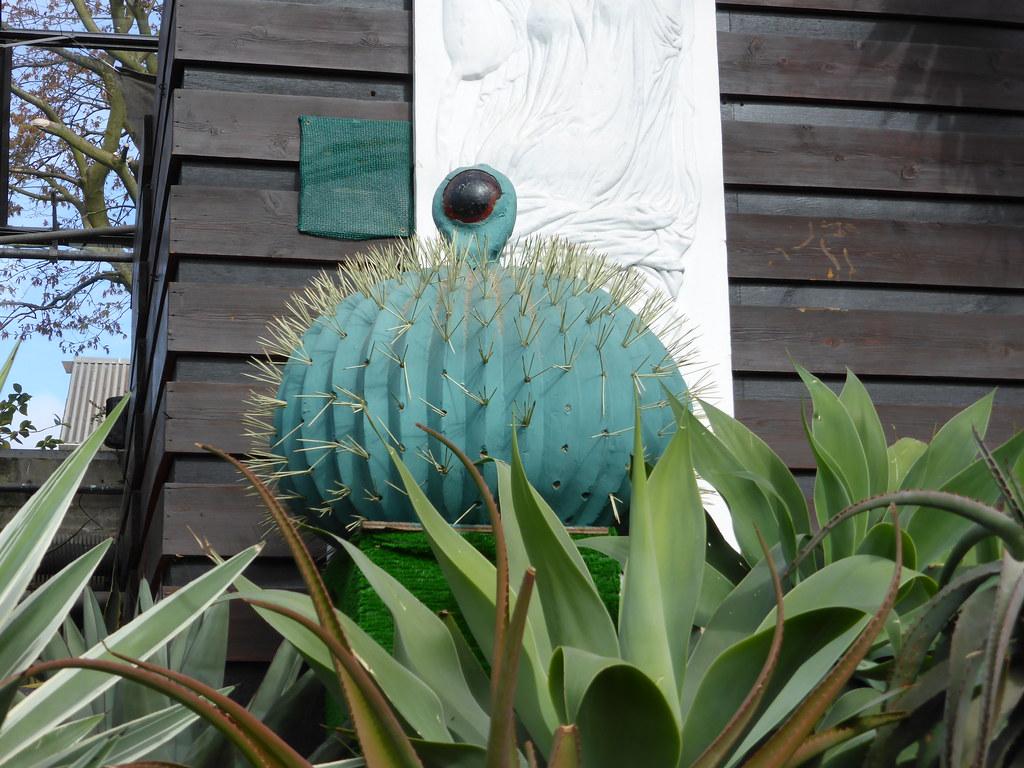 spike the talking cactus duthie park u0026 winter gardens ab u2026 flickr