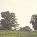 HFF - A walk on the farm