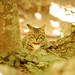 Crimean cats going wild!