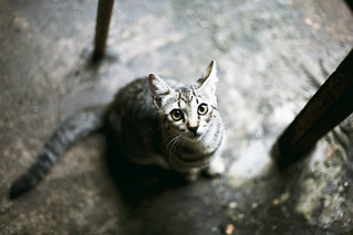 una mirada felina | by ✖uzu Photo✖