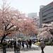 Hanami at Ueno Park 01