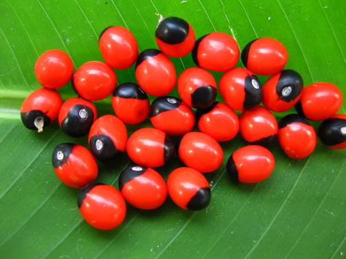 Red And Black 3d >> Guruvinda ginjalu | Flickr - Photo Sharing!