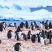 Antarctica-111123-388