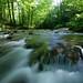 Le Ruisseau de La Brême