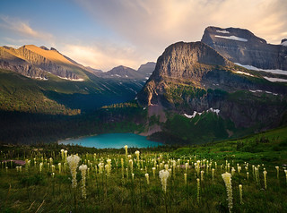 Bear Grass Heaven | by Rob Macklin