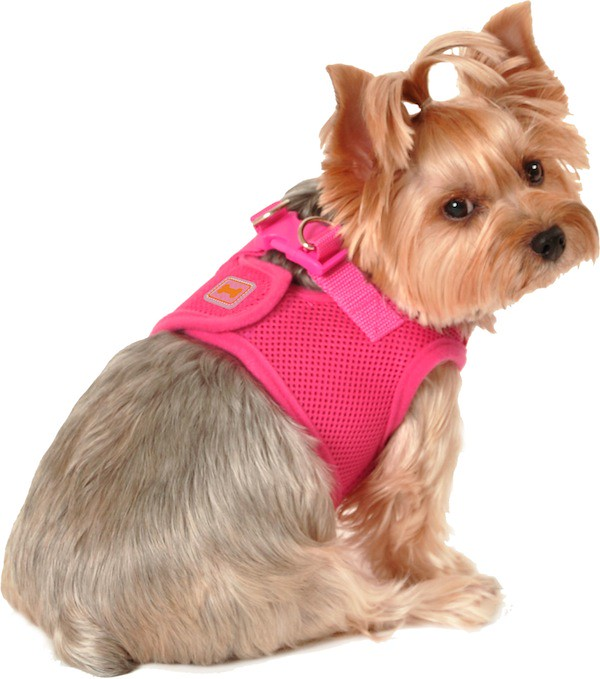 simplydog hot pink body harness hot pink mesh body harness flickr. Black Bedroom Furniture Sets. Home Design Ideas