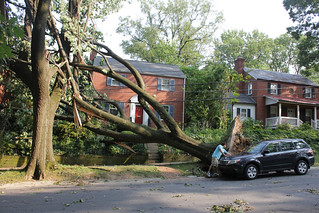 washington dc derecho: big tree down | by woodleywonderworks